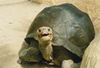 Die Schildkröte lebt im Loropark auf Teneriffa und lächelt Dich an