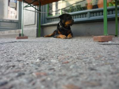 Hund unter Bank