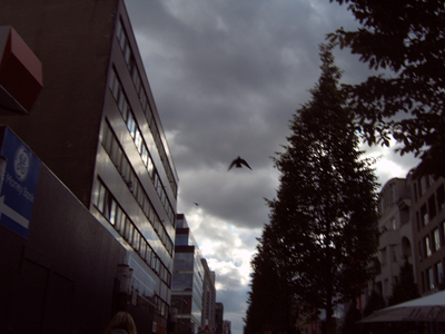 Taube am düsteren Himmel