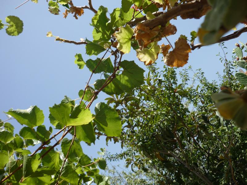 Blätter, Silja Korn