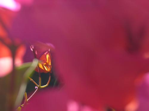 Blume mit Schnabel, Silja Korn