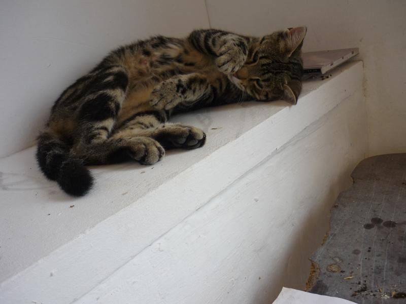 Katze chillt, Silja Korn