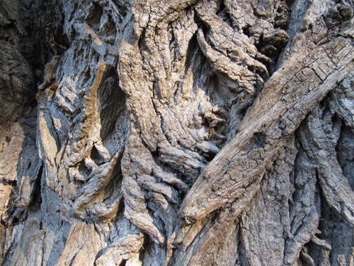 Baum im Lietzenseepark, Silja Korn