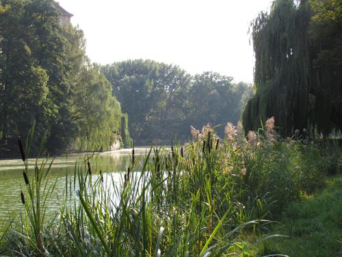 Weide am See im Lietzenseepark, Silja Korn