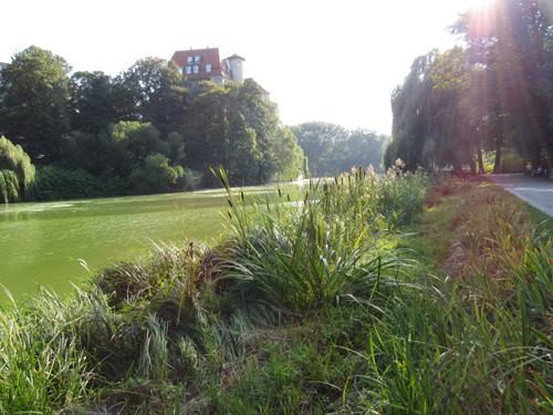 Der See im Lietzenseepark, Silja Korn