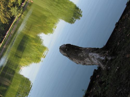 Baumstamm am Wasser im Lietzenseepark, Silja Korn