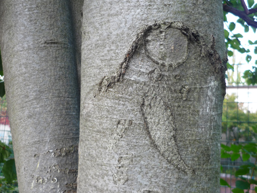 Silja Korn, Narben am Baum