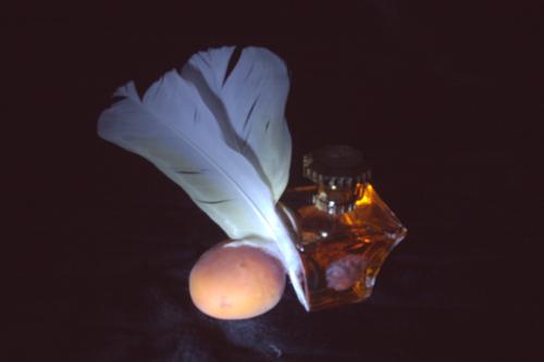 Silja Korn, Lichtmalerei, Feder, Aprikose und Parfum