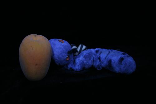 Silja Korn, Lichtmalerei, der Wurm und die Aprikose