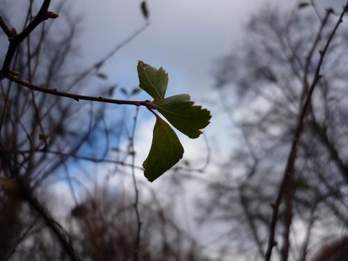 Silja Korn, Blatt im Vorfrühling