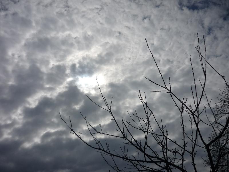 Dunkle Wolke mit Baum