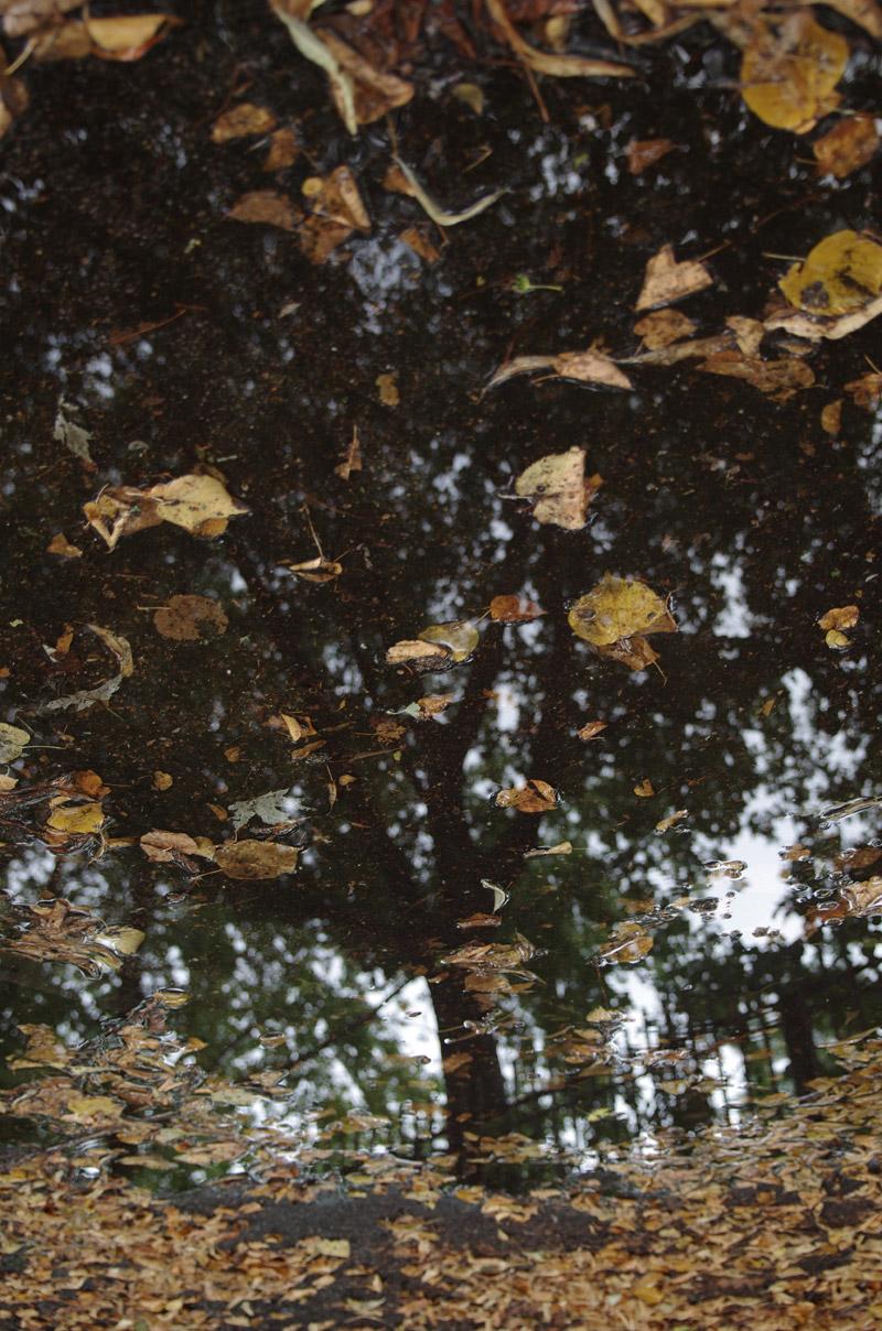 Silja Korn, gespiegelter Baum