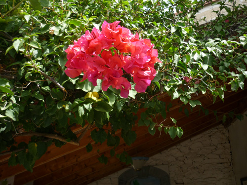 Rote Blume im Garten