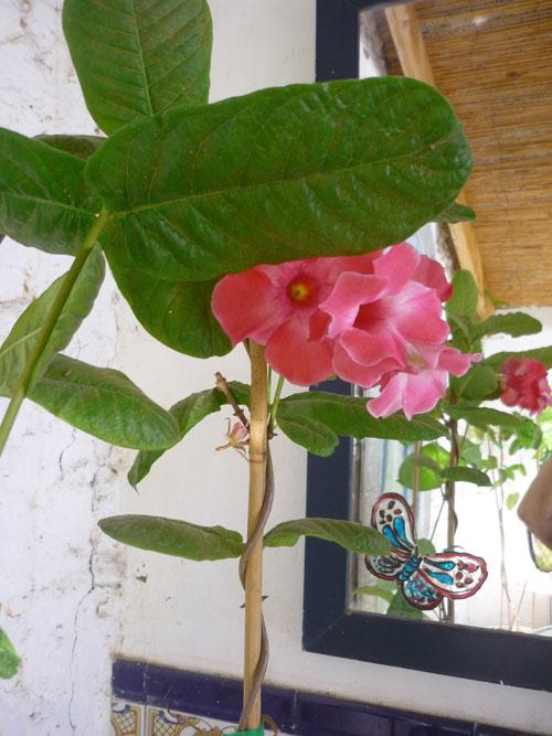 Rote Blume im Hof