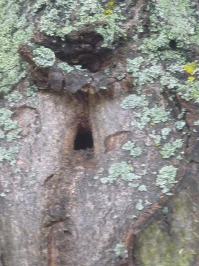Baum mit Loch