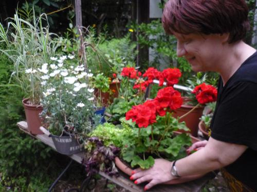 Silja Korn und blühende Pflanzen
