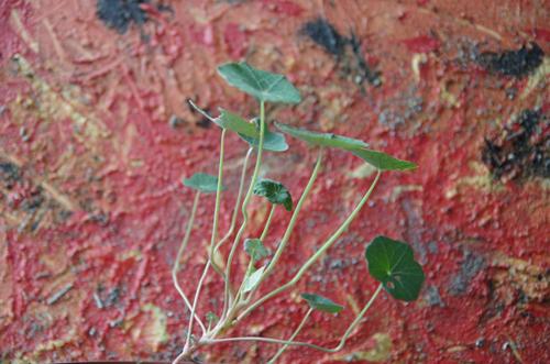 Die Pflanze mit Trieben