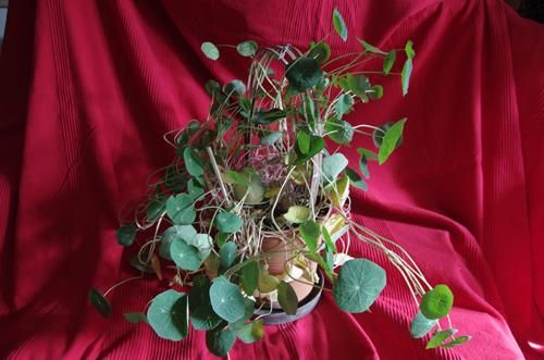 Die Pflanze mit Blättern